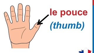 French Lesson 31 - BODY VOCABULARY Finger names - Les doigts de la main Dedos de la mano en francés
