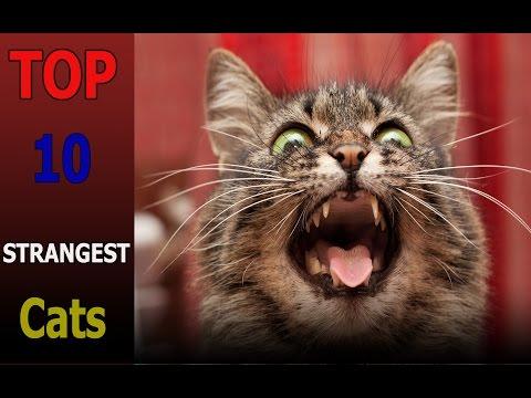 Top 10 strangest cat breeds | Top 10 animals