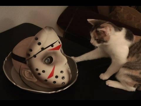 Cats on Halloween - YouTube