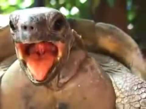 Turtle Moaning While Having Sex
