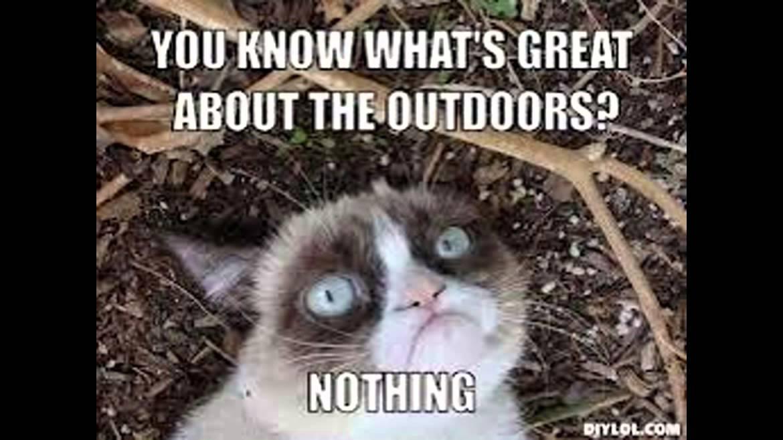 Grumpy Cat Quotes Youtube