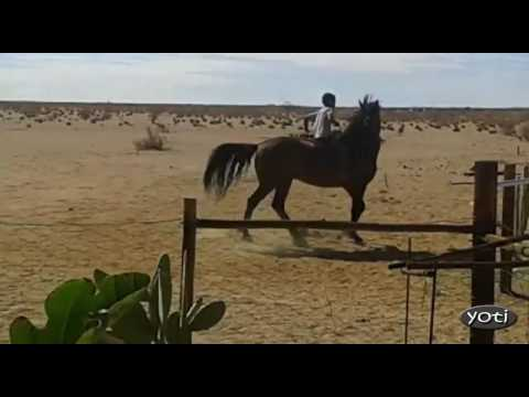 Amazing horse riding by young boy.