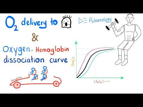 Oxygen Delivery 🚚 To Tissue | Oxygen Dissociation Curve | Respiratory Physiology