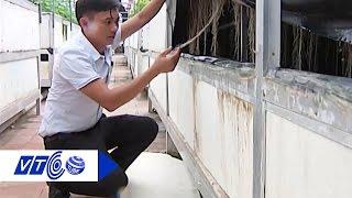 Trồng rau, củ sạch không cần đất | VTC