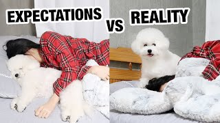 Owning A Dog: Expectations vs. Reality