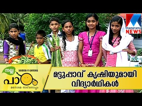 Students displaying wonders of terrace farming | Manorama News