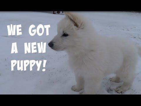 WE GOT A NEW PUPPY! (WHITE GERMAN SHEPHERD)