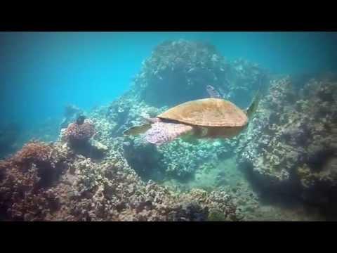 maui-scuba---diving-in-paradise