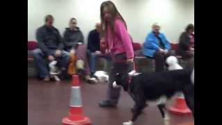 Dog Training In Dorset - Heelwork Practise
