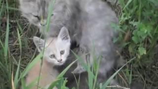 Брошенная кошка и котята, живут в придорожной канаве.