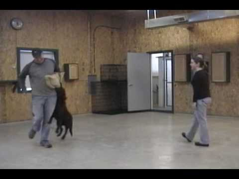 Fort Wayne Dog Training - IN HOME DOG TRAINER - Ft Wayne Indiana