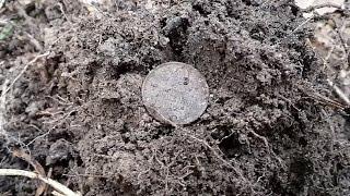 Поиск монет с АКА Сигнум МФТ 7272М №1 Советы