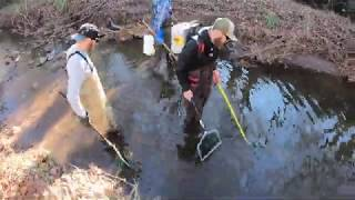 How to Count Fish in a Creek