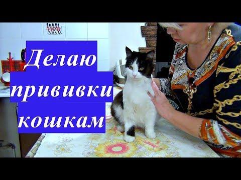 Вопрос: Надо ли вакцинировать собак и кошек комплексной вакциной Почему?