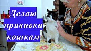 Делаю сама прививки кошкам. Вакцины.