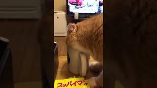 茶々丸 麦茶うんめぇ〜(ᵔᴥᵔ) thumbnail