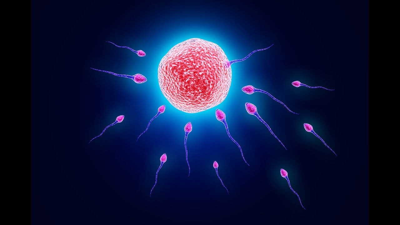 Sexual reproduction in human beings images