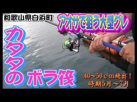 【カタタのいかだ】梅雨時期の筏で釣れる大型グレを狙うためのフカセ釣り仕掛け紹介