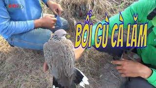 Cu Gáy Hòn Đất -Bổi Gù Cà Lăm/Trapped bird cuckoo