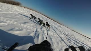 Ездовой спорт, упряжка 4 собаки,  6 км. Хабаровск