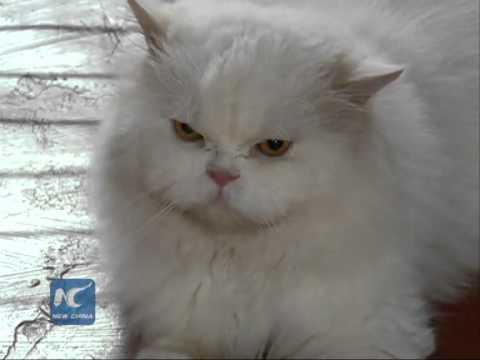 Pet care booms in India