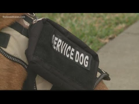 Veteran with PTSD in need of service dog