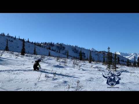 Ptarmigan Hunting The Alaska Backcountry