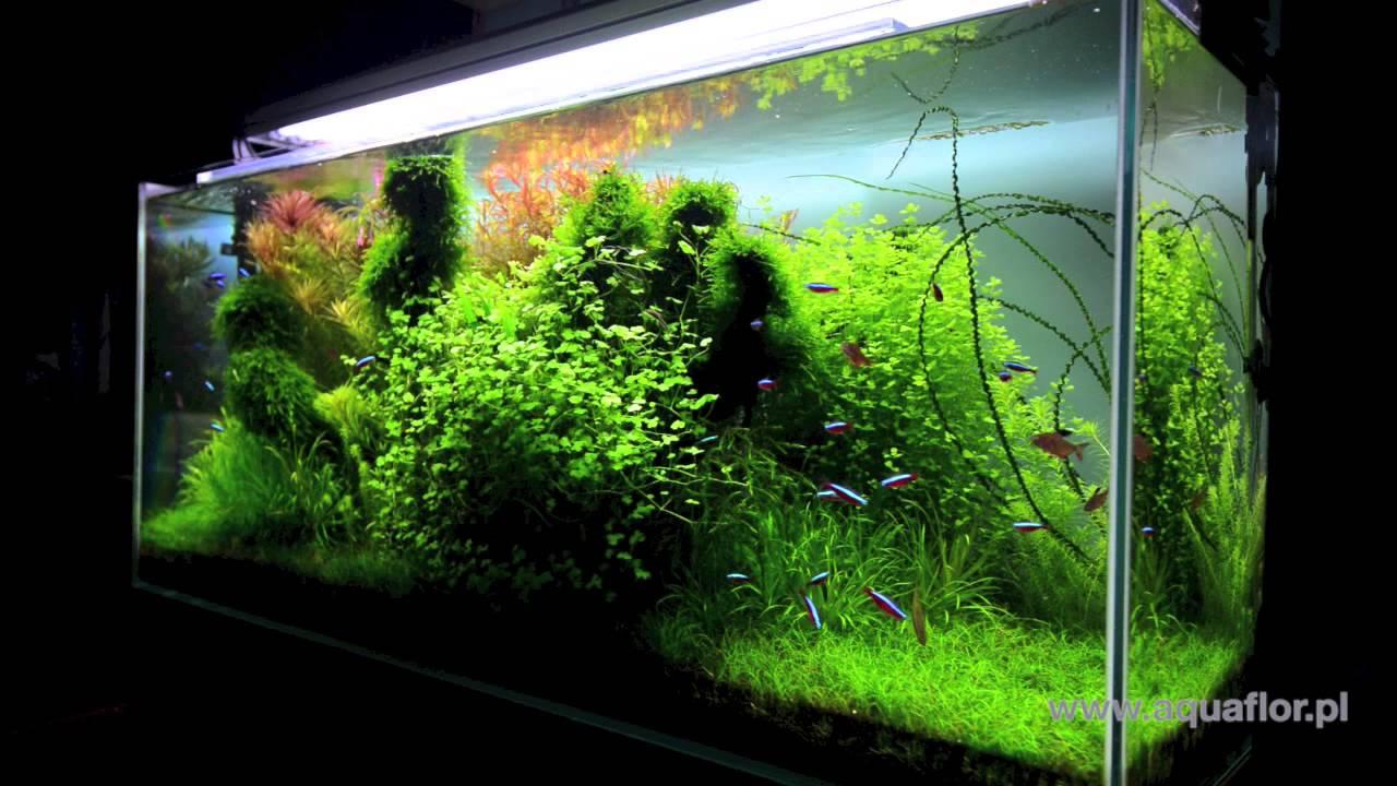 Akwarium 120x40x50 240l hd youtube for Aquarium 120x40x50