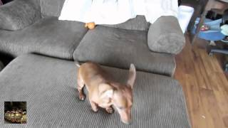 Чихание собак  Приколы