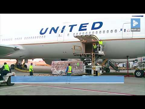 United Airlines is Temporarily Suspending its Animal Shipping Program