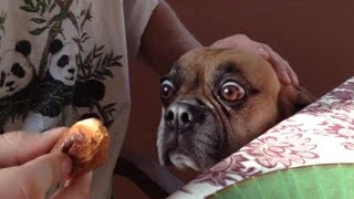 """""""dogs Getting Excited Over Food Compilation"""" 