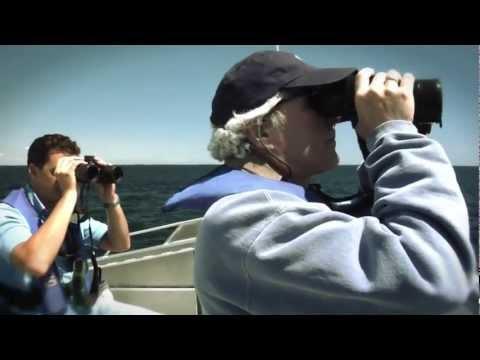 Ocean Frontiers AQUARIUM HD