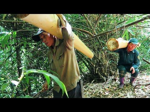 Harvesting Bamboo Shoots | MĂNG RỪNG TÂY BẮC – Tập 1