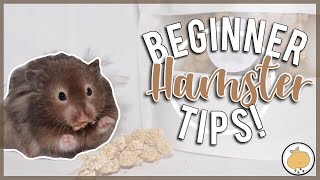 3 TIPS BEFORE BRINGING A HAMSTER HOME! 🐹 | Hamster Care
