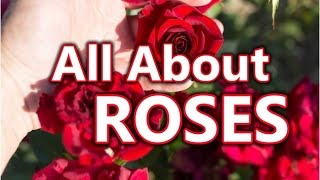 Roses Planting Growing and Caring for Rose Flowers Plants Gardening | How To