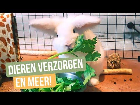 Werken in mijn dierenopvang: dieren verzorgen & nieuwe spullen