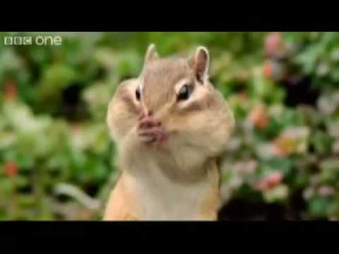 beatboxing chipmunk   walk on the wild side   youtube