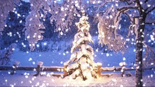 Snowfall on Christmas Tree at Dusk