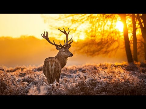 The Breathtaking Beauty of Nature | HD