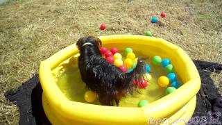 Cute Dog Playing In Baby Pool