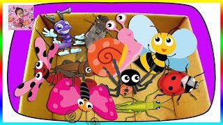 Insects Education Learning Video Bug Names for Kids