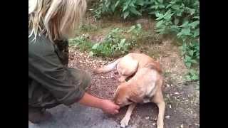 Rubin - pies znaleziony przy szosie