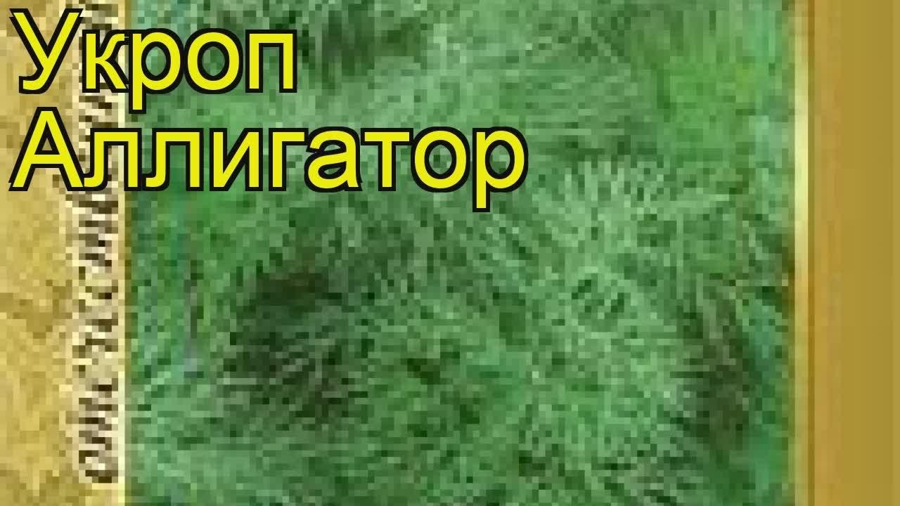 23 ноя 2017. Спешите купить семена репы для обогащения грядки. Предлагаем вам недорого заказать семена репы оптом с доставкой по месту.
