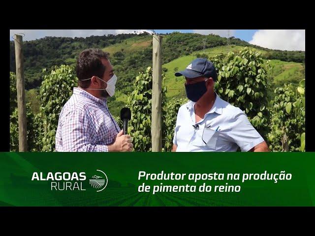 Produtor aposta na produção de pimenta do reino em Alagoas
