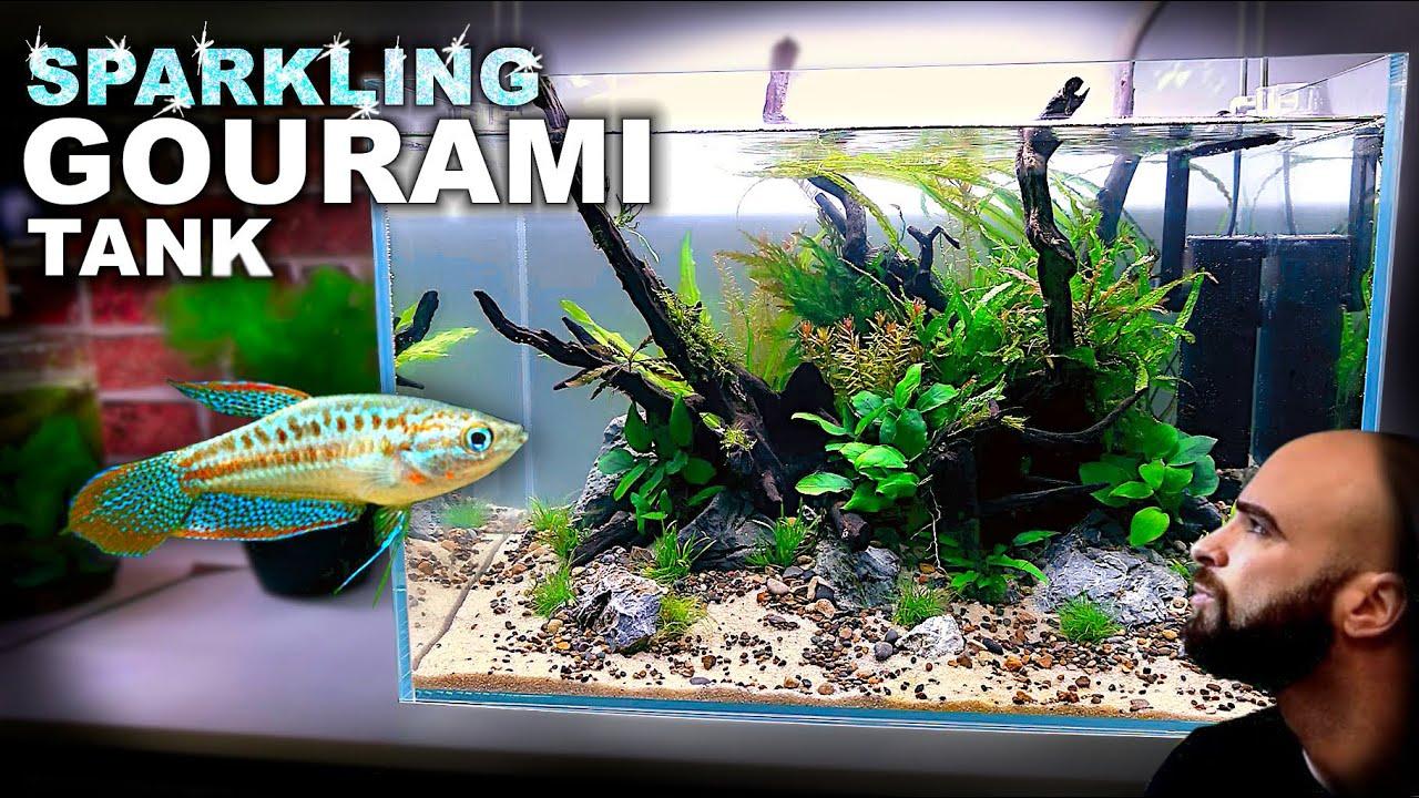 Aquascape Tutorial: SPARKLING GOURAMI Aquarium (How To: Step By Step Planted Tank Build Guide)