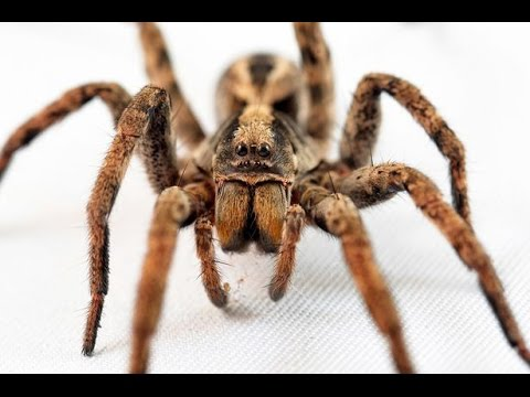 Giant Spiders Sharks & Biggest Snakes  World&39;s Greatest Animals  👍👍