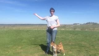 Как улучшить контакт с собакой на прогулке. Часть 3