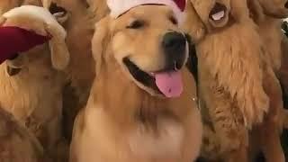 Найди в видео настоящую собаку среди игрушечных!