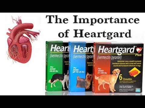 The Importance of Heartgard