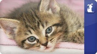 Khloe Kardashian Odom - Momma gets kitten-clingy - The Litter Episode 16
